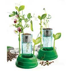 Atelier créatif : Botanique et hydroponie Clementoni